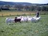 Bauernmarkt - Fahr doch mal hin - Familie Alterauge