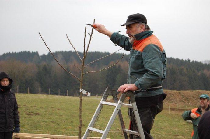Rund um den Obstbaum - Pflanz- und Erziehungsschnitt in Theorie und Praxis - Foto: olpe biologisch