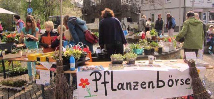 Pflanzentauschbörse Olpe - Foto: privat