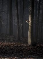 Fotoausstellung Wald - Wendener Hütte