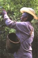 Grundlegende Kriterien des fairen Handels