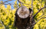 Baumpflege - Olpe